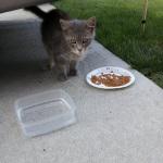 Спасённая кошка приносит в этот мир и в дом своих хозяев очаровательных котят