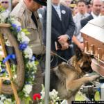 Полицейский пёс прощается с павшим коллегой