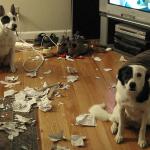 14 псов-нарушителей спокойствия, застигнутых врасплох. Но всё равно милых
