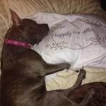 Пропавшая собака нашлась благодаря бекону