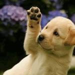 18 прелестных животных хотят поздороваться с тобой!