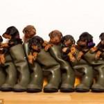 13 восхитительных щенков — и все у одной мамы