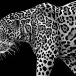 Художник потратил целый год, создавая самые детальные рисунки животных