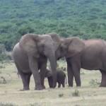 Просто замечательно, что камера поймала слонёнка именно в этот момент