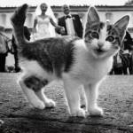 Животные тоже хотят попасть в свадебный фотоальбом!