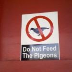 Вот почему ни в коем случае нельзя кормить голубей!