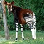 20 необычных животных, о существовании которых вы, возможно, и не догадывались