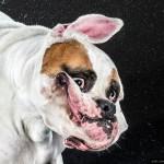 Собаки и их неподражаемое обтряхивание в замедленной съёмке
