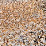 15 фотографий-победителей 2013 года в номинации «Дикая природа»