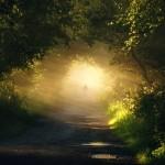 Килиан Шонбергер и его сказочные лесные пейзажи