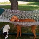 30 кошек и собак, проигравших Битву за Свободу от человеческой мебели