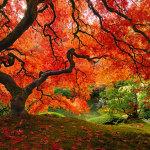 13 потрясающих фотографий, раскрывающих всю красоту осенних красок