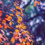 Магия осени, отражённая на снимках Александры Гриншпун