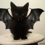 Ужасно милые костюмы для домашних животных на Хэллоуин