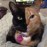 Познакомьтесь с Венерой, кошкой с двумя мордочками!