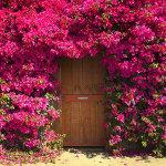 26 великолепных дверей, ведущих в сказку