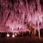 Деревья невиданной красоты со всего света… На это стоит взглянуть!