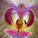 17 цветов, которые вызовут у вас самые невероятные ассоциации!