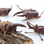 Шоколадным мозгам не терпится поднять вам настроение! Работы мастеров шоколадного искусства