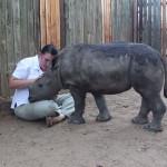 Маленький носорог боится спать один после того, как его мать убили браконьеры