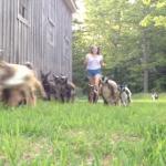 Некоторые козлята тоже обожают зарядку! Убедитесь в этом сами!